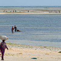 Pêche Zanzibar